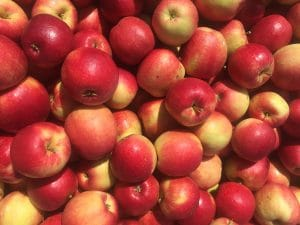 Local Apples at Pepin Country Stop