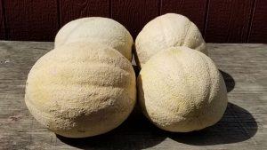 Melons - Seasonal Produce at Pepin Country Stop
