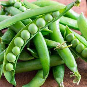 Snap Peas - Seasonal Produce at Pepin Country Stop